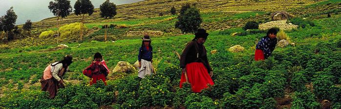 Aymara women and girls