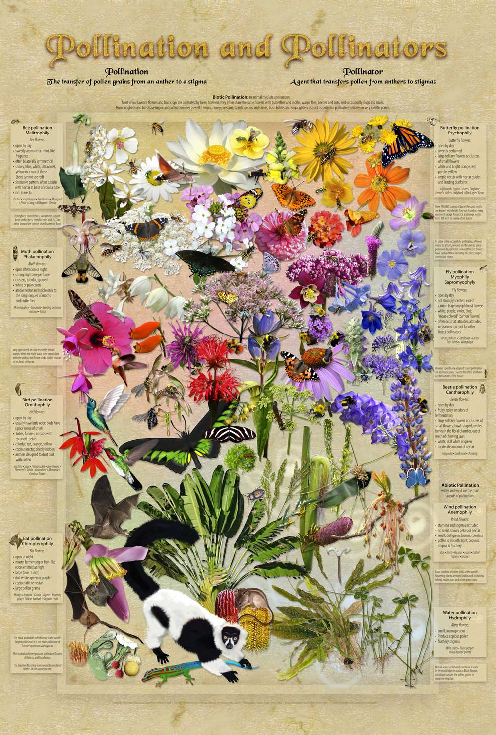 Pollination poster