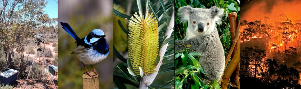Australian flora and fauna image