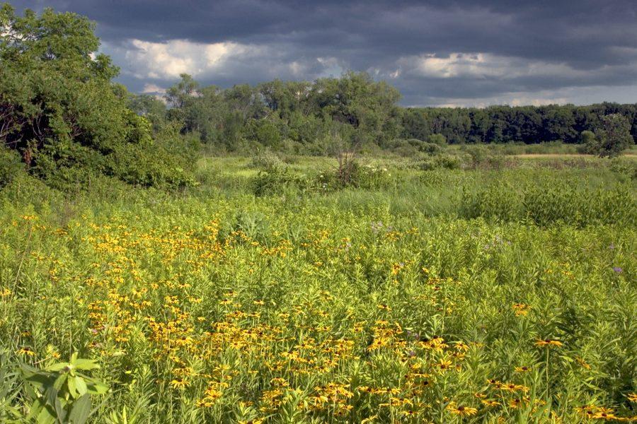 Curtis Prairie, UW Arboretum