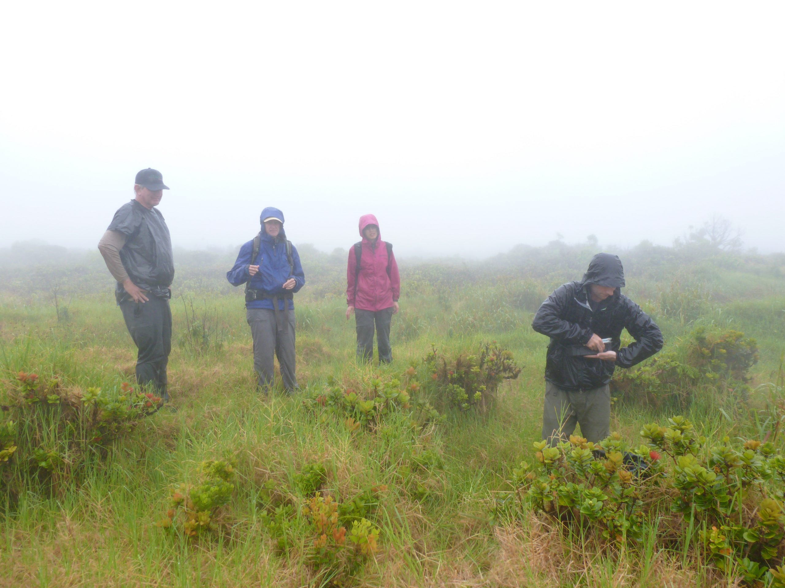 Picture of Dr. Peter Vitousek (Stanford) with the Botany Department's Dr. Sara Hotchkiss and graduate students Soo Hyun Kim and Kevin Barrett arranging a boggy Kohala trek