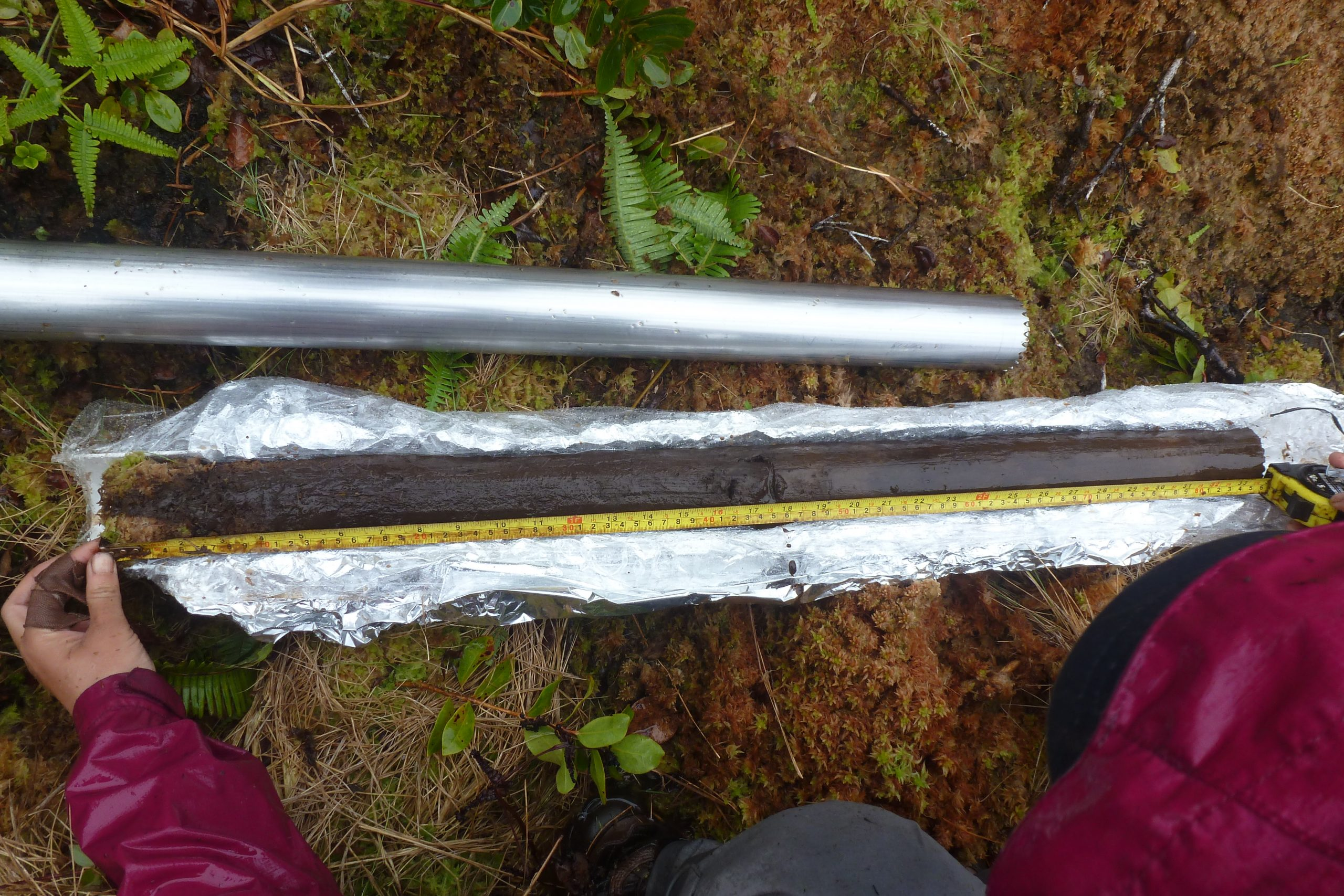 picture of Confirming the length of a Kohala peat sediment core